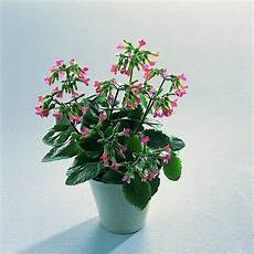 piante da appartamento con fiori bianchi fiori da appartamento piante appartamento come