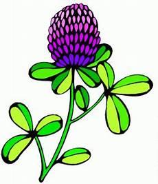 Malvorlage Blumen Einfach Blume Violette Bluete Einfach Ausmalbild Malvorlage Blumen
