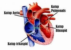 Anatomi Tubuh Black Anatomi Jantung