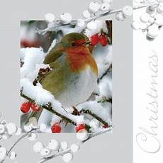 86 best robin cards 2 images pinterest christmas cards winter and christmas bird