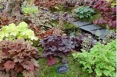 cold weather tough perennials for colorado part 2