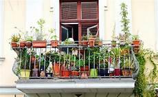 Quelles Plantes Choisir Pour Un Balcon 224 L Ombre