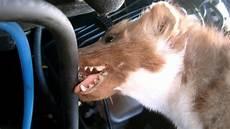 was hilft gegen marder im auto so lassen marder ihr auto in ruhe welt