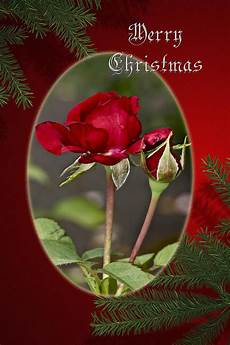 merry christmas greeting card roses photograph by mother nature