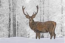 Tiere Im Winter Und Nackte B 228 Ume Erleben Freizeitundco