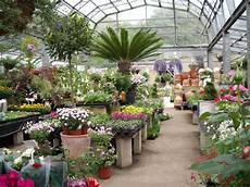 how to buy plants on clearance and which ones the