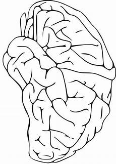 coloring page brain coloring picture brain free