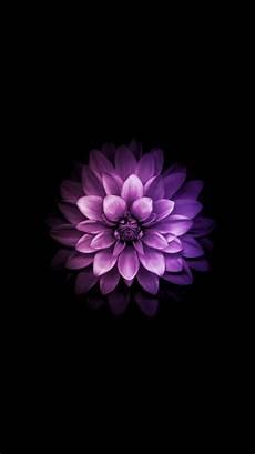 iphone purple flower wallpaper wallpaper iphone wallpaper in 2019 beautiful flowers