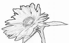 Blumen Malvorlagen Kostenlos Xyz Bildvorlage Sonnenblume