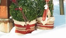 Blumenkübel Winterfest Machen - winterschutz f 252 r pflanzen so geht 180 s winterschutz de