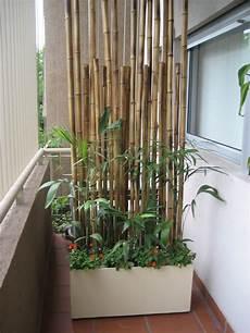 Balkon Sichtschutz Ideen - balkon sichtschutz pflanzen pflanzkuebel bambusstangen