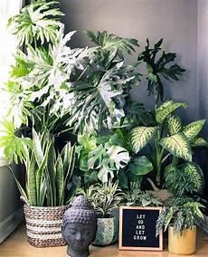 Pflanzen Die Die Luft Reinigen Dies Sind Die Pflanzen Die Die Luft Reinigen Pflanzen