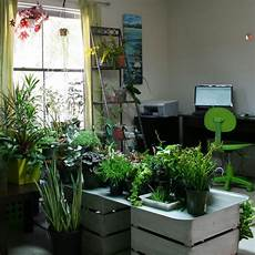 the rainforest garden how to plant a garden indoors