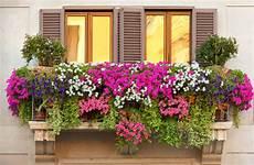 terrazzo in fiore un balcone fiorito 15 magnifici esempi da cui trarre