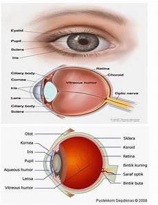 Bagian Mata Fungsi Cara Kerja Gambar Sklera Organnya