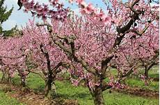 la consolata borgo d ale la primavera a borgo d ale comune borgo d ale