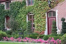 20 Plantes Grimpantes Pour Tapisser Vos Murs En Beaut 233