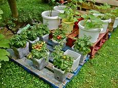 container gardening pallets a success willem