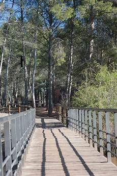 Gambar Pohon Alam Hutan Kayu Jembatan