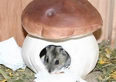Zwerghamster Info Das Hamster Heim