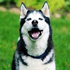 welcher hund passt zu mir test welcher hund passt zu mir mach den test
