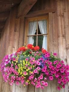 fioriere per davanzale finestra summer window box ideas janela indiscreta rear window