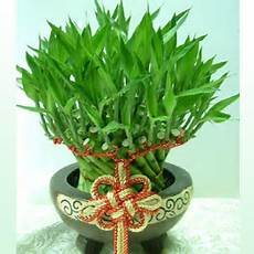 Feng Shui Plants And Flower Xiaoming S Goodwill Feng