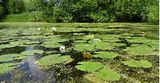 langham pond flagship pond site crop freshwater habitats trustfreshwater habitats trust