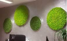 moosbilder für die wand runde moosbilder mit islandmoos als wandeko im b 252 ro