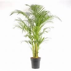 s 233 lection de 24 plantes d 233 polluantes pour votre int 233 rieur