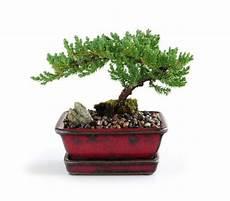 bonsai beginner s weekly thread 2016 week 2 bonsai