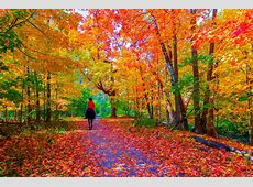 Slow Ride down Autumn Lane HD Wallpaper   Background Image