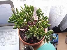 plante succulente entretien cactus plante grasse