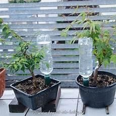 Pflanzen Bewässern Im Urlaub - bew 228 sserung bonsai mit pet flaschen und tonkegel