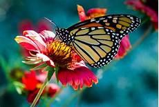 Schmetterling Blume Makro 183 Kostenloses Foto Auf Pixabay