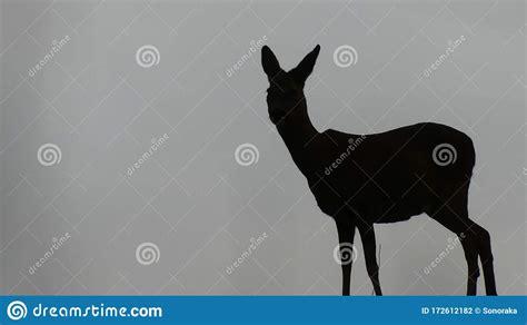 Female Deer Silhouette