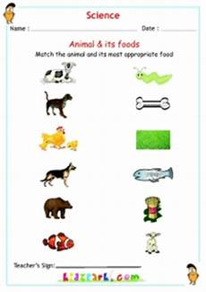 worksheets with animals and their food 14086 herbivores carnivores omnivores