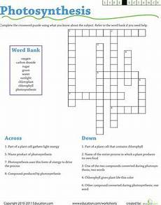 image result for photosynthesis worksheet elementary school photosynthesis worksheet science