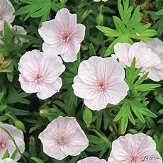 plantes par correspondance commande de plantes d avril le jardin du 19 232 me