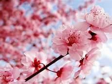 Gambar Bunga Wallpaper Bunga Cantik