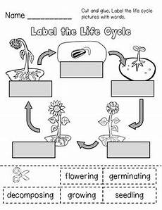 worksheets on plants cycle 13606 sunflower cycle and plant parts unit by tpt