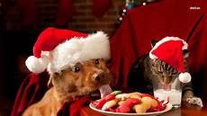pet care advice decorations food plants