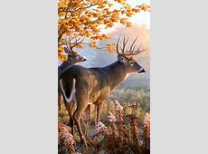 live deer wallpapers   Android Apps on Google Play