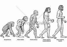 die evolution des menschen ein guter baumeister h 228 usern dezember 2014