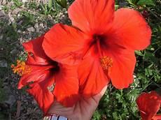 immagini gratuita fiori immagini gratis foto desktop scaricare