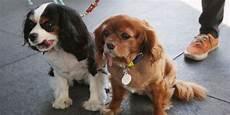 spa mulhouse chien la spa sauve neuf chiens de laboratoire de l euthanasie