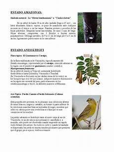 simbolo natural del estado lara s 237 mbolos naturales de venezuela ivon horticultura y jardiner 237 a bot 225 nica