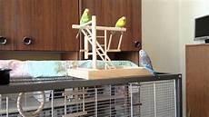 Wellensittich Spielzeug Selber Bauen - wellensittich holz spielplatz