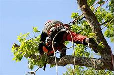 devis elagage arbre elagage arbre grand hauteur branche jardin 95 urgence rapide