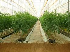 culture hors sol solution fertilisante ou nutritive